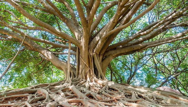 TOK Essay - tree